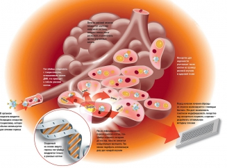 Стадия распада раковой опухоли