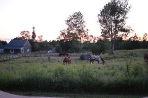 Camp Medolark's horses in the meadow