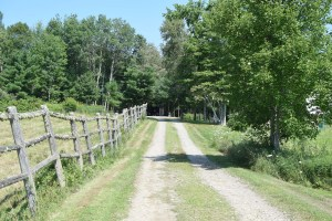 the road leading to camp