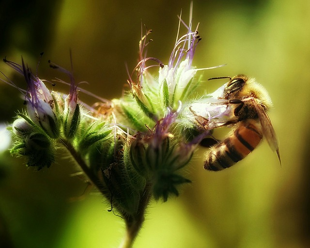 nestanak pčela