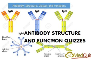 Antibody-structure-classes-and-function