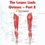 The Lower Limb Quizzes – Part 2