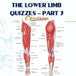 The Lower Limb Quizzes – Part 3