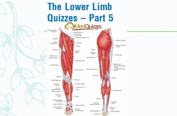 The Lower Limb Quizzes – Part 5