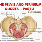 The Pelvis and Perineum Quizzes 3