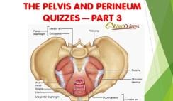 The Pelvis and Perineum Quizzes 3
