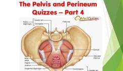 The Pelvis and Perineum Quizzes 4