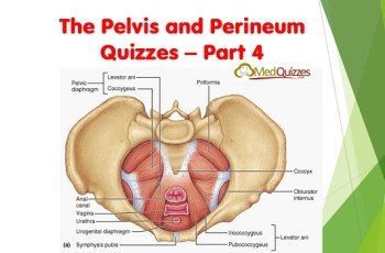 The Pelvis and Perineum Quizzes 4