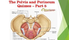 The Pelvis and Perineum Quizzes 5
