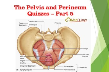 The Pelvis and Perineum Quizzes 5