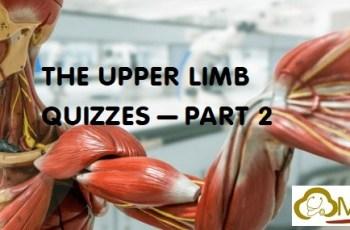 Upper Limb 2