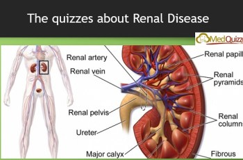 The quizzes about Renal Disease