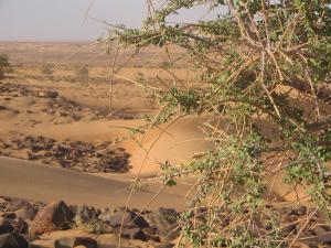 dakhlet_dunes-acacia-02