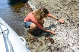 osservazione Patella ferruginea a Marettimo, con l'AMP Isole Egadi