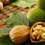Photo of У чому користь волоського горіху для організму