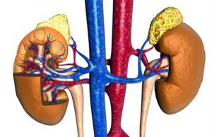 Photo of Пухлина надниркових залоз або феохромоцитома: симптоми і лікування