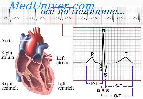 Картинки Сердца Экг