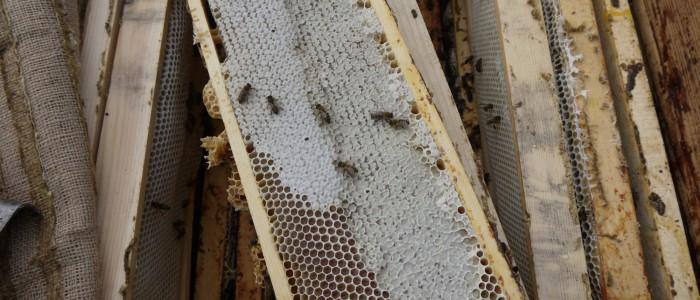 мед от местных пчел