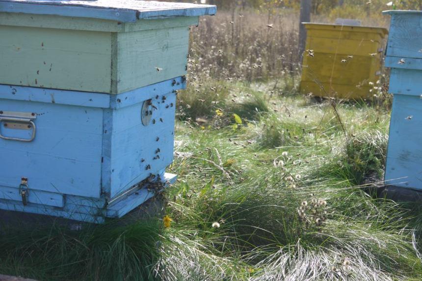 осенний облет пчел