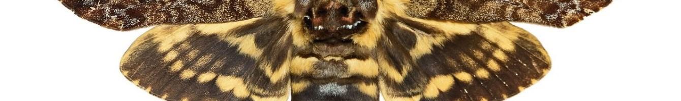 враг пчел