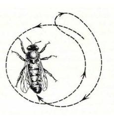 отрыватель танца пчел
