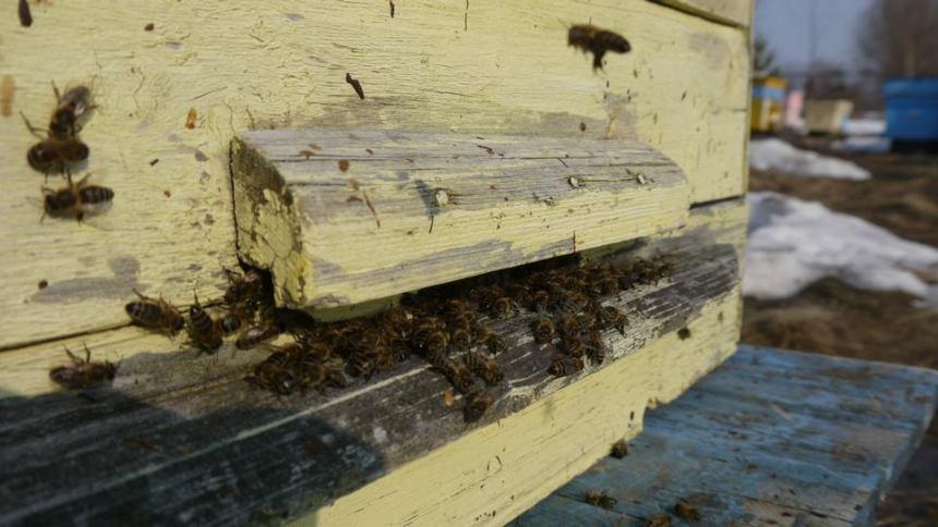 пчелки полетели