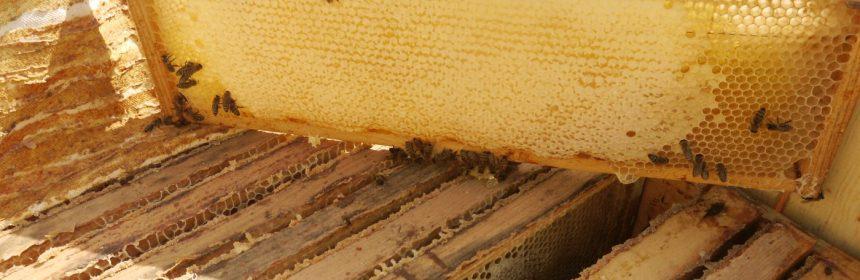 рамка с сотовым медом
