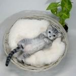 羊毛フェルト サバトラ猫さん