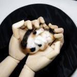 両手に包まれて安心して寝ている子ネコさん。羊毛フェルトの作品です。