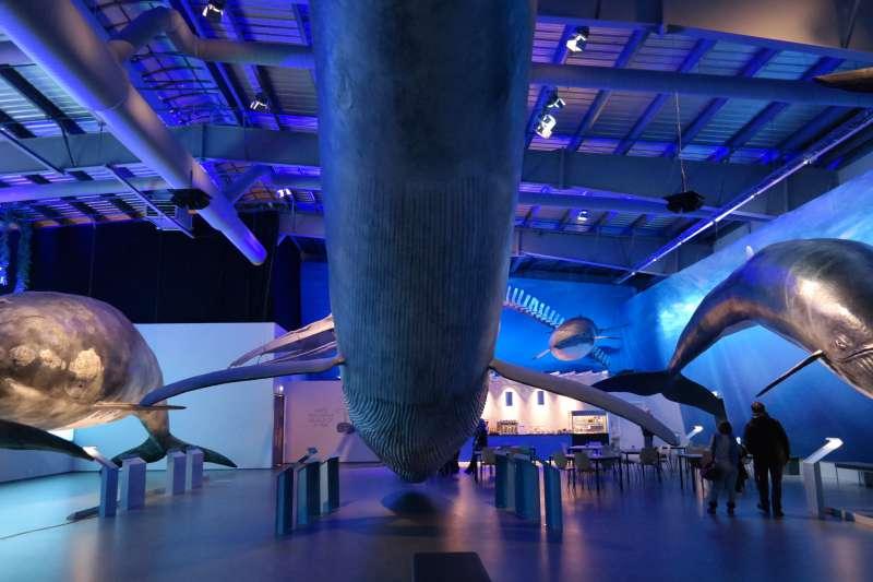 Sehr lang, so ein Blauwal.