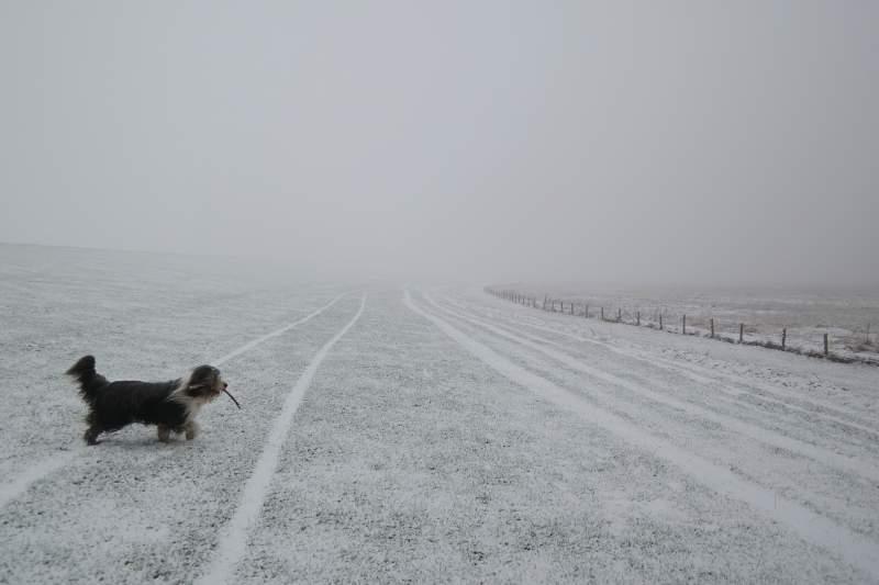 Deich, Nebel, Schnee