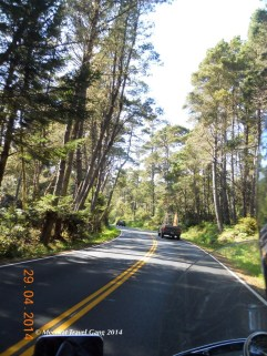 Highway 1 forest