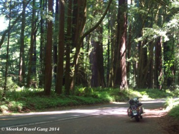 Gonzalo in the redwoods