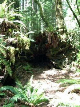 The Humboldt forest looks like a fairie paradise! :)