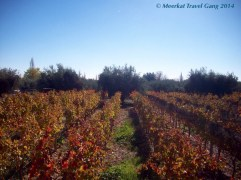 The autumn vineyard of the Tempus Alba wine estate. We didn't see any grapes, but the golden russet leaves were beautiful.