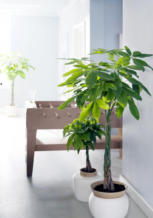 kamerboom in huis