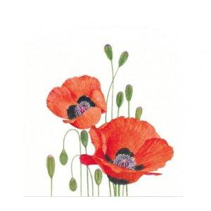 Servetten bloemenprent klaprozen 25x25