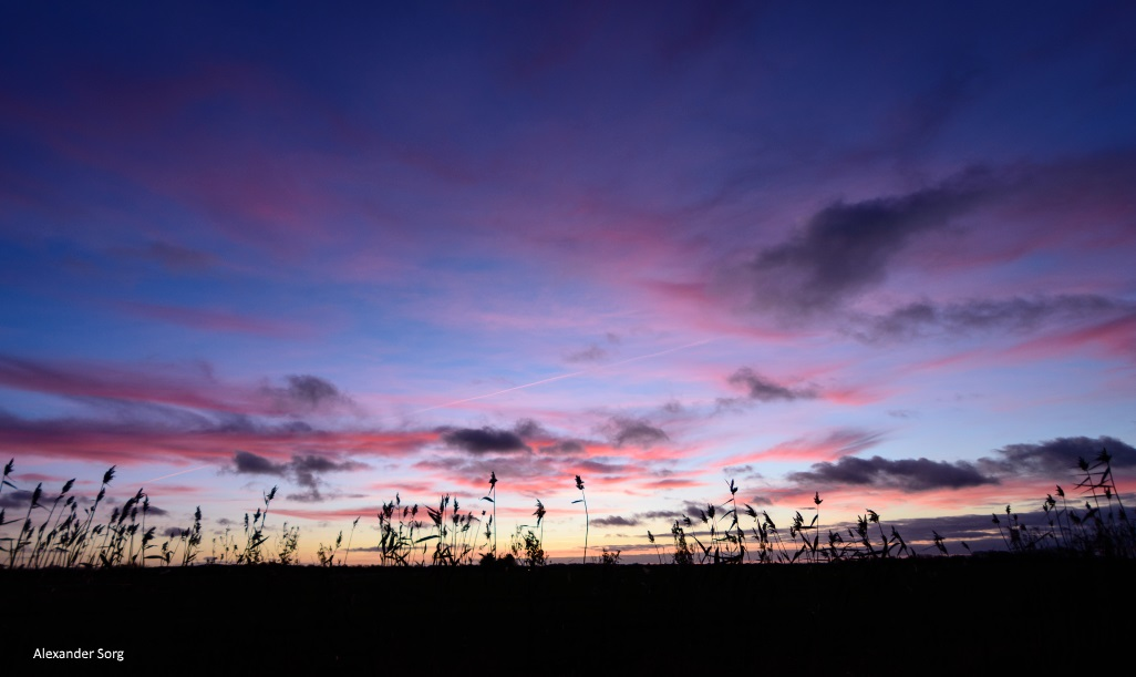 Sonnenaufgang im dänischen Winter