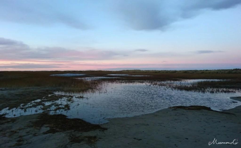 Dänemark Grenen Seewiesen Verlandung