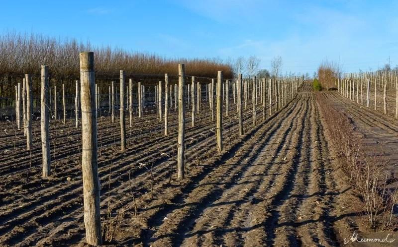 Weinanbau in Dänemark Weingut
