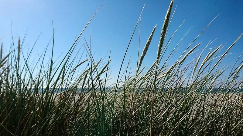 Strand Dünengras Meer