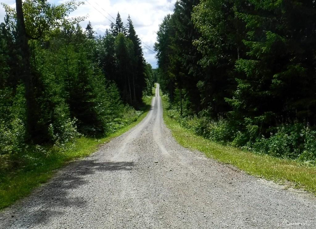 Schweden Wald Straße