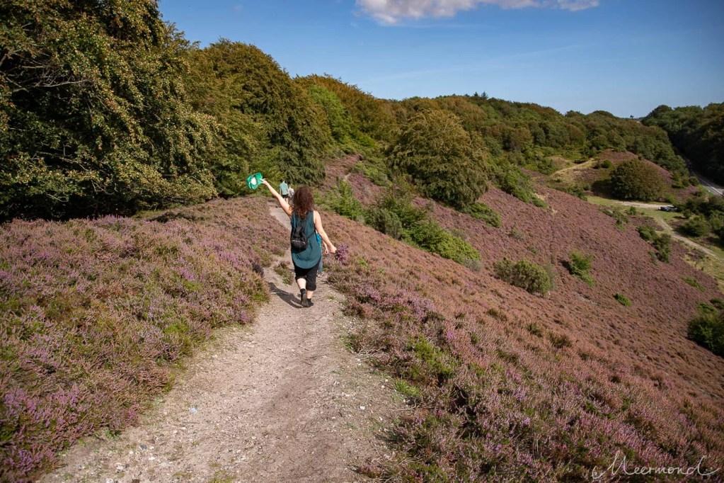 Frau wandert bei Brune Bakker inmitten blühender Heide