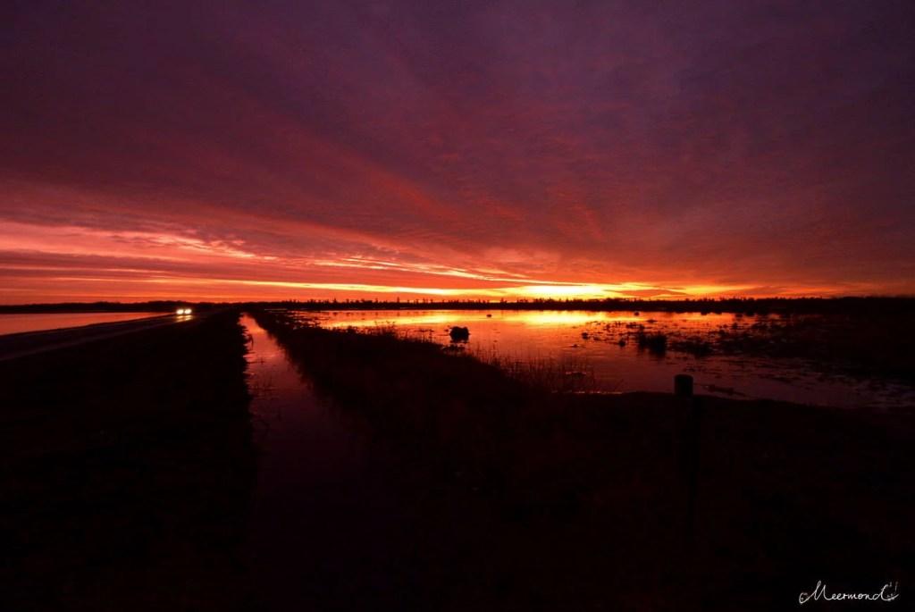 Sonnenuntergang in Magenta