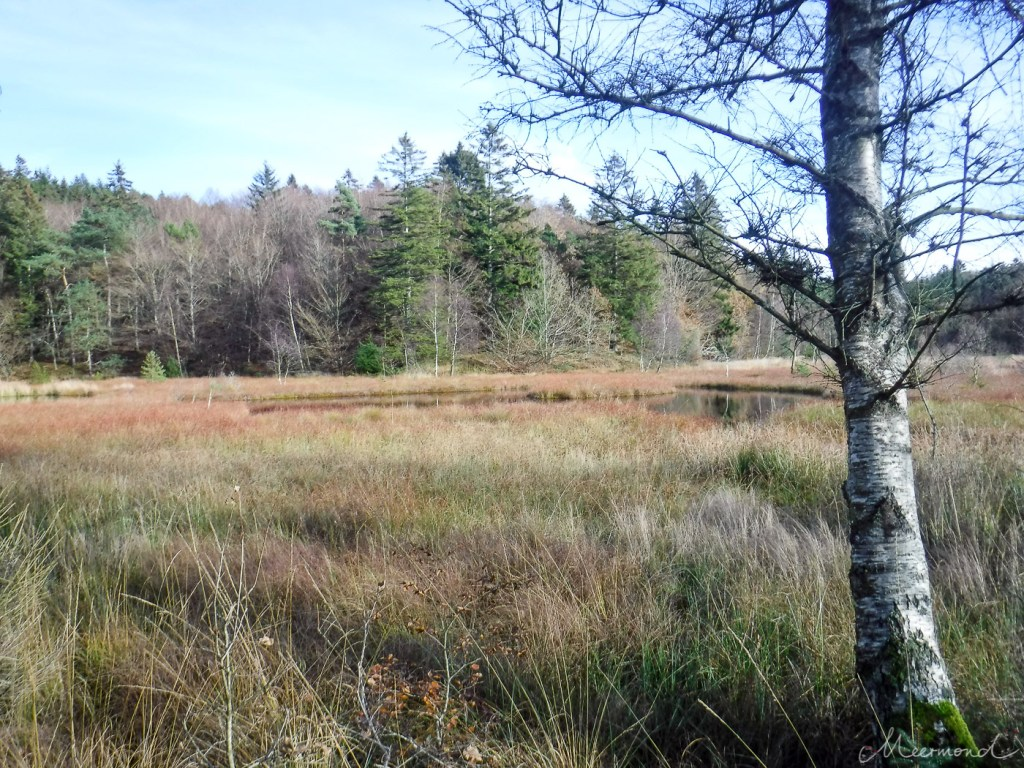 Moorgebiet am See in Dänemark