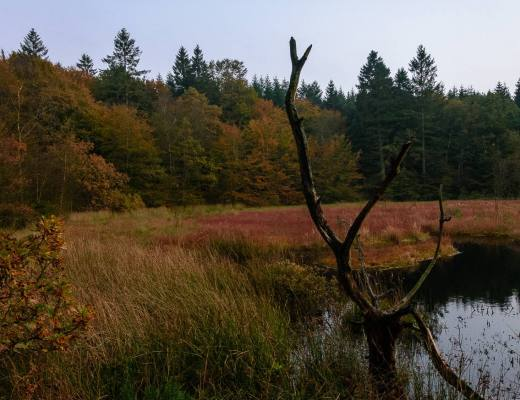 Moorgebiet Dänemark