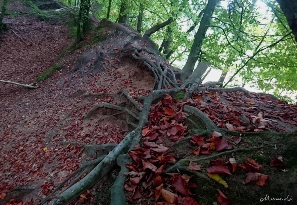Wald in Nordjütland
