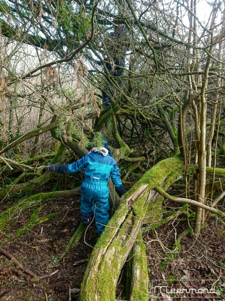 Knorriger Baum bei Fosdalen