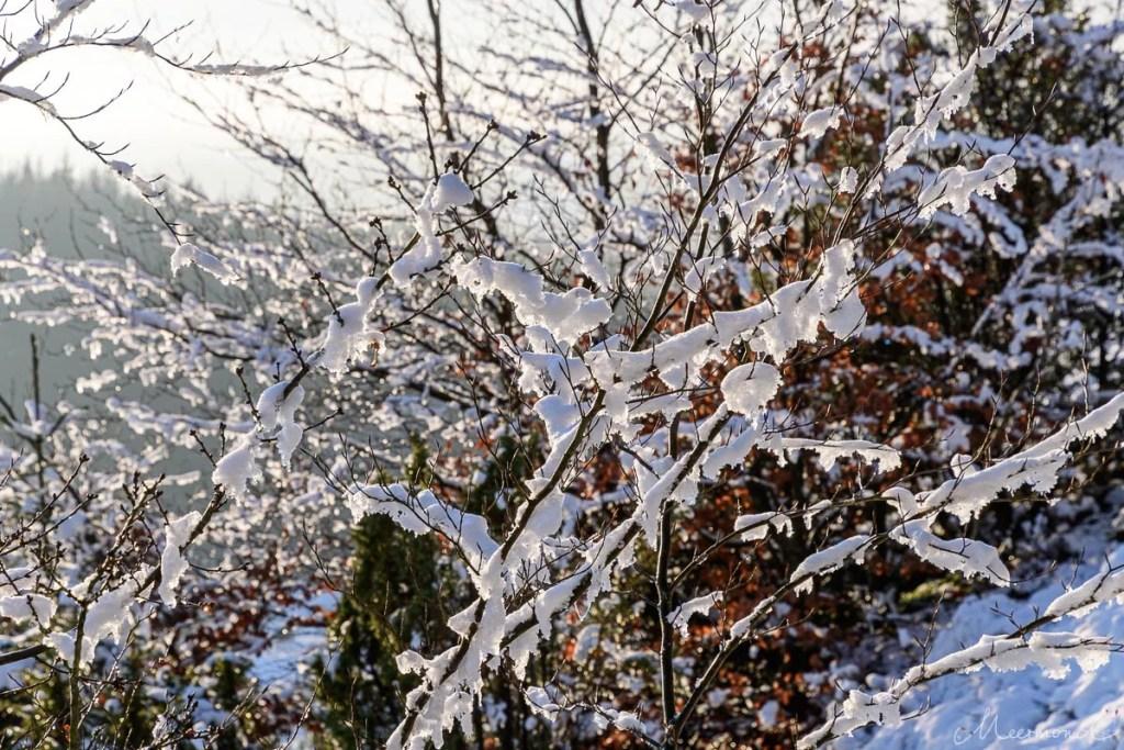Schneebedeckte Zweige in Dänemark