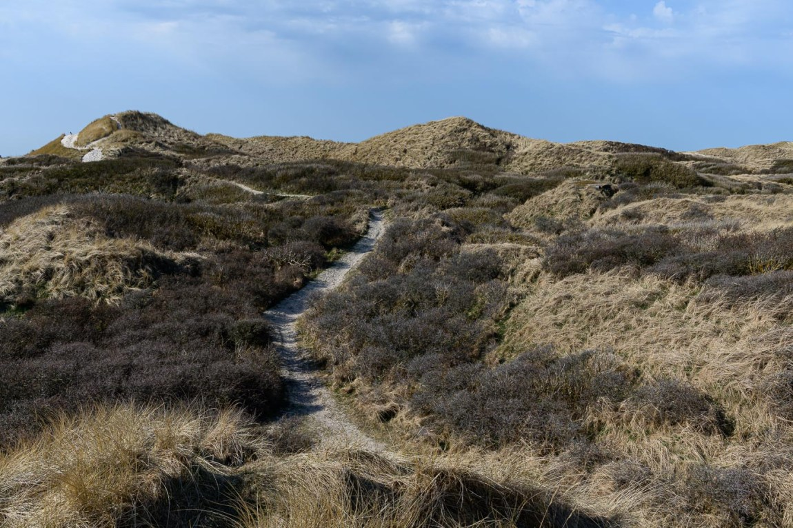 Frühling in Dänemark - Weg durch die Dünen
